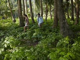 Explorez les îles avoisinantes depuis l'hôtel Song Saa Private Island