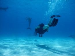 Une adresse idéale pour les plongeurs