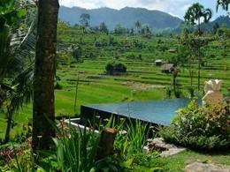 Vue des rizières qui entourent l'hôtel