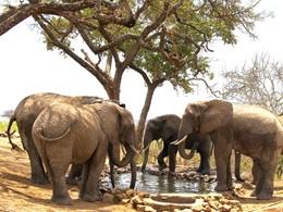 Troupeau d'éléphant