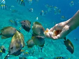Snorkeling à l'hôtel Vila Ombak situé à Lombok