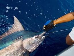 Initiez-vous à la pêche aux gros