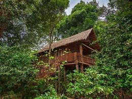 Superbes villas nichées dans les arbres
