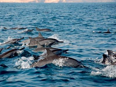 À la rencontre des dauphins