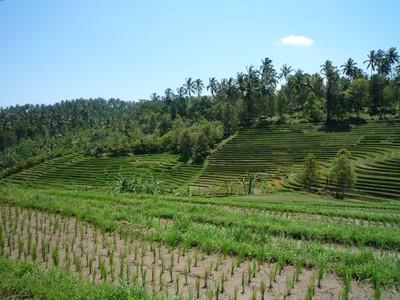Balade à vélo dans les rizières de Jatiluwih