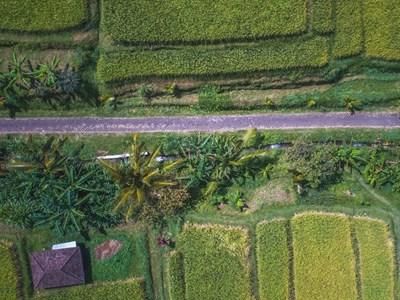 Nos circuits à Bali