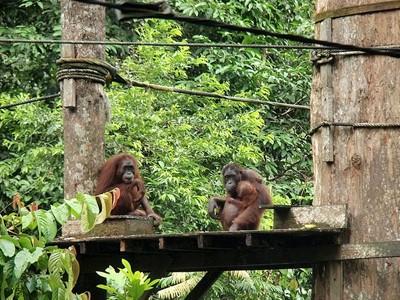 Centre de découverte de la forêt tropicale