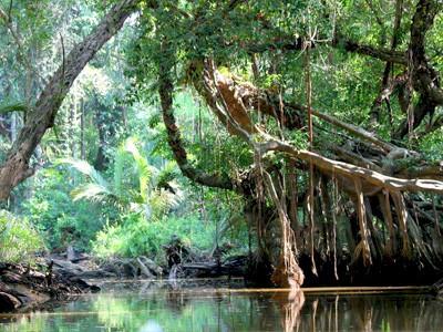 Découverte de la petite Amazone