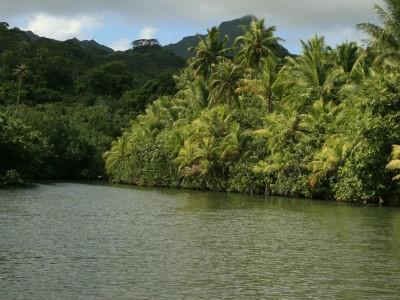 Naviguez sur la Faaroa, unique rivière praticable de Polynésie française
