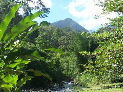 Forêt de cœur Bouliki