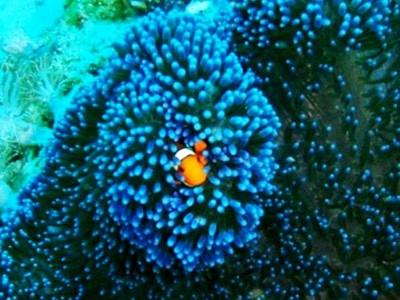 Forfait plongée à Pom Pom Island