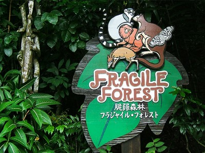 Fragile Forest