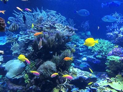 Gerdener's Reef