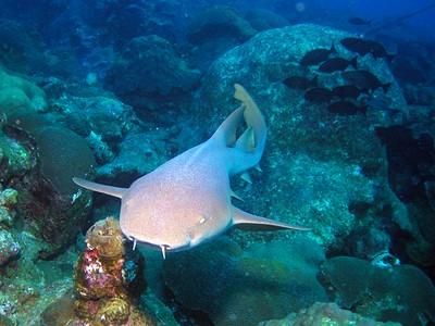 Grotte aux Requins Dormeurs