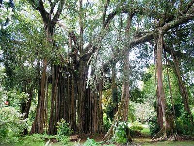Jardin botanique de Harrison Smith