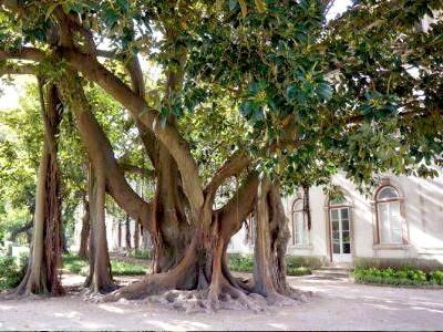 Jardin botanique de la faculté des sciences