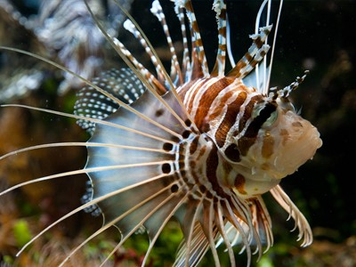L'Aquarium La Colline