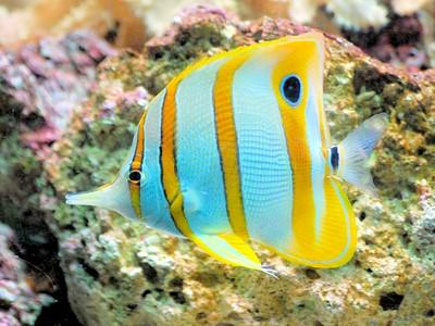 L'Aquarium de Belle Mare