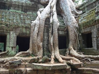 L'Essentiel d'Angkor & Panorama de la Gastronomie locale