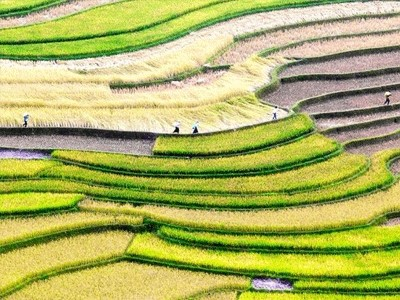 Les différentes étapes de la fabrication du riz