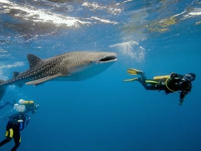 Plongée et croisières aux Maldives
