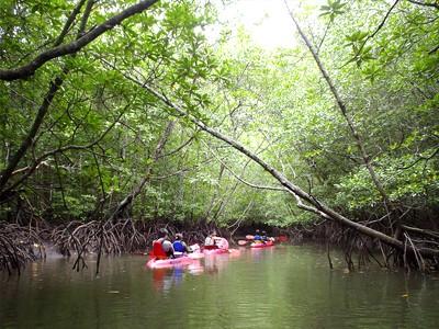 Mangroves de Langkawi