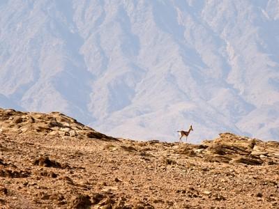 Montagnes de Qara