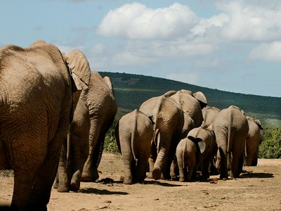 Parc National Addo Elephant