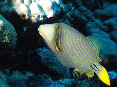 Récif de Tiputa