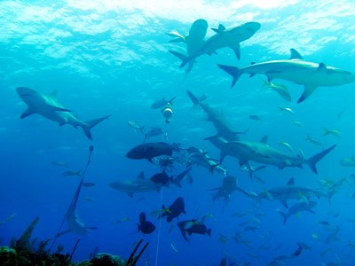 Récif des requins
