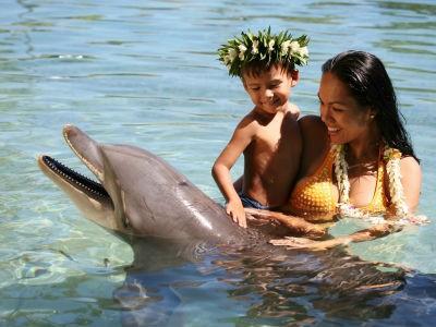 Rencontre avec un dauphin au Moorea Dolphin Centre