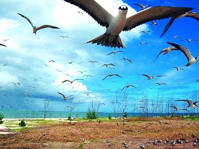 Réserve Naturelle de l'île aux Cocos