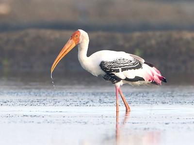 Réserve ornithologique de Prek Toal