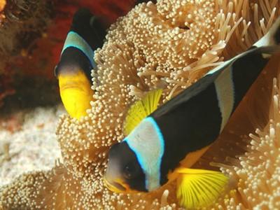 Excursion Safari de Mer au départ de Mahé aux Seychelles