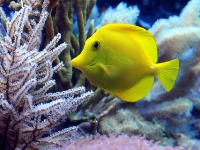 Découverte en sous marin