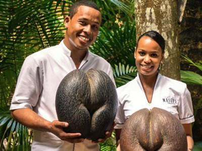 Vallée de Mai et Anse Lazio sur l'île de Praslin aux Seychelles