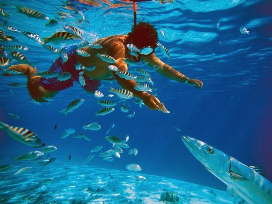 Les eaux cristallines de Tahiti attirent les amateurs de plongée sous-marine