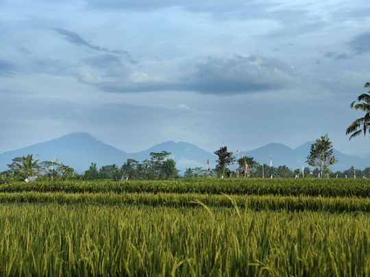 Vue des rizières