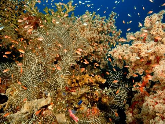Découvrez la richesse des fonds marins