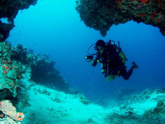 Explorez les richesses sous-marines