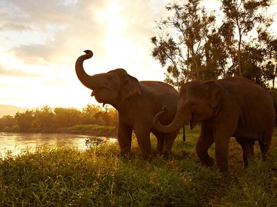 Cotoyez et apprenez à soigner les éléphants à l'hôtel Anantara