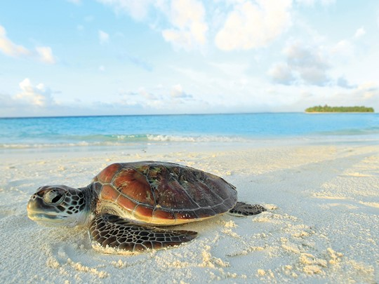 Rencontre avec la faune protégée de l'île