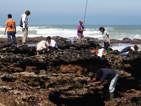 Pêche à l'hôtel Areias do Seixo situé à Lisbonne