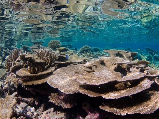 Séjour sur l'Atoll d'Huvadhoo
