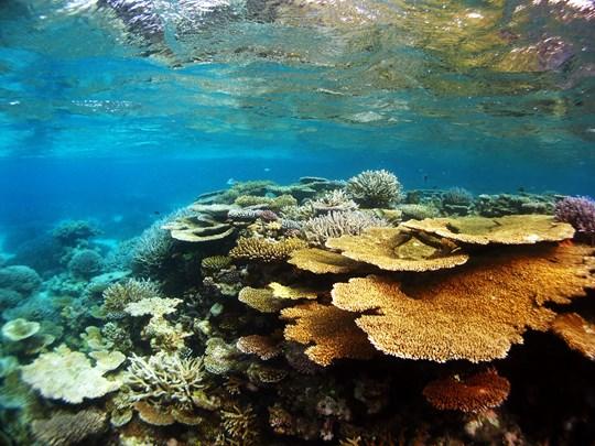 Séjour sur l'Atoll de Rasdhu