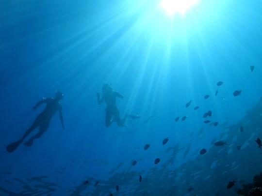 Partez à la découverte des fonds marins