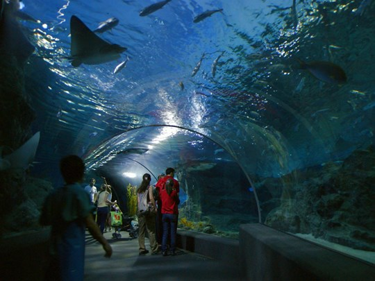 Visitez le superbe aquarium Sea World Bangkok Ocean World