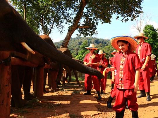 L'Elephant Rescue Park