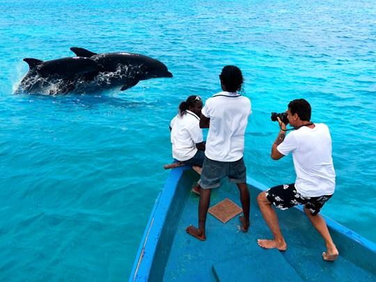 Partez à la rencontre des dauphins