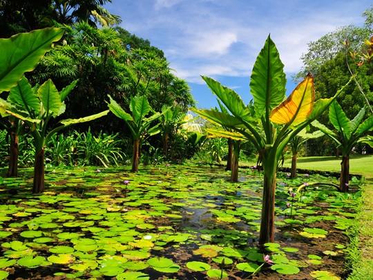 Découvrez la richesse florale du jardin botanique de Mahé